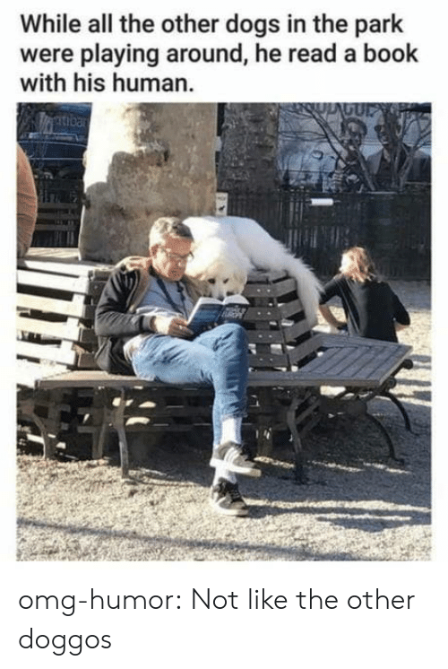Dogs, Omg, and Tumblr: While all the other dogs in the park  were playing around, he read a book  with his human omg-humor:  Not like the other doggos