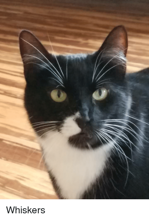 Strike, Whiskers, and  Pose: Whiskers