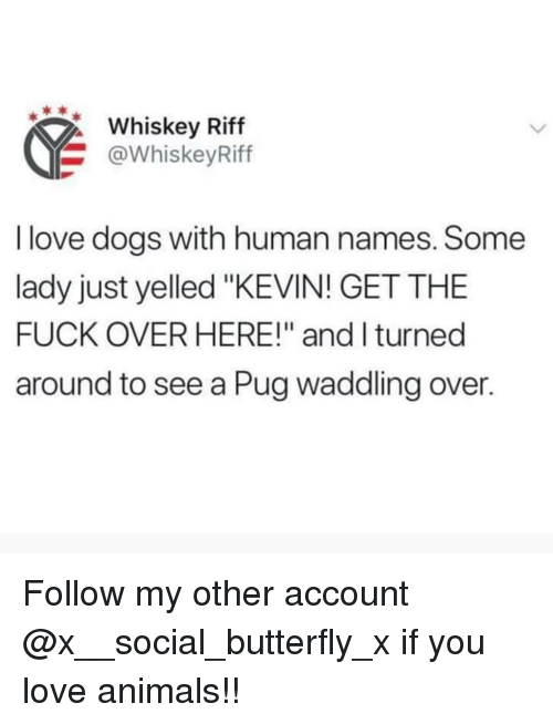 "Love Dogs: Whiskey Riff  @WhiskeyRiff  I love dogs with human names. Some  lady just yelled ""KEVIN! GET THE  FUCK OVER HERE!"" and I turned  around to see a Pug waddling over. Follow my other account @x__social_butterfly_x if you love animals!!"