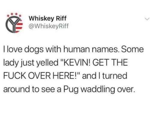 "Love Dogs: Whiskey Riff  @WhiskeyRiff  I love dogs with human names. Some  lady just yelled ""KEVIN! GET THE  FUCK OVER HERE!"" and I turned  around to see a Pug waddling over."
