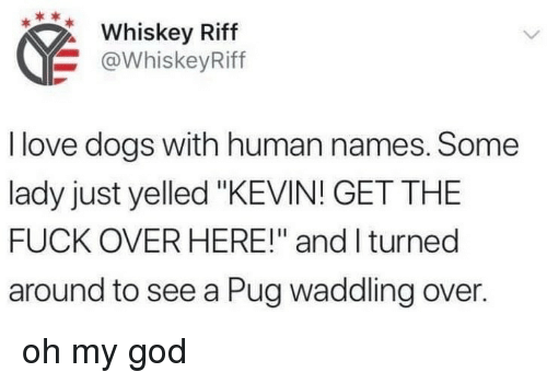 "Love Dogs: Whiskey Riff  @WhiskeyRiff  I love dogs with human names. Some  lady just yelled ""KEVIN! GET THE  FUCK OVER HERE!"" and I turned  around to see a Pug waddling over. oh my god"