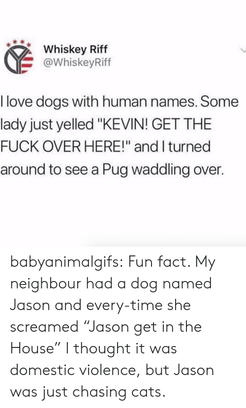 "Love Dogs: Whiskey Riff  @WhiskeyRiff  I love dogs with human names. Some  lady just yelled ""KEVIN! GET THE  FUCK OVER HERE!"" and I turned  around to see a Pug waddling over. babyanimalgifs:  Fun fact. My neighbour had a dog named Jason and every-time she screamed ""Jason get in the House"" I thought it was domestic violence, but Jason was just chasing cats."