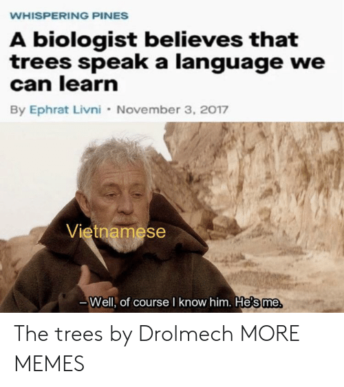 Dank, Memes, and Target: WHISPERING PINES  A biologist believes that  trees speak a language we  can learn  By Ephrat Livni November 3, 2017  Vietnamese  Well, of course I know him. He's me The trees by Drolmech MORE MEMES