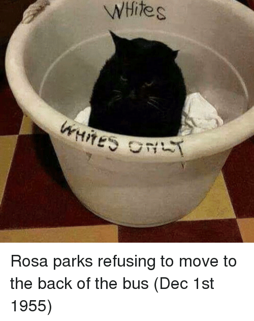 Rosa Parks, White, and Back: WHite s Rosa parks refusing to move to the back of the bus (Dec 1st 1955)