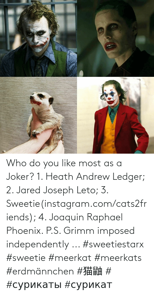 andrew: Who do you like most as a Joker? 1. Heath Andrew Ledger; 2. Jared Joseph Leto; 3. Sweetie(instagram.com/cats2friends); 4. Joaquin Raphael Phoenix. P.S. Grimm imposed independently ... #sweetiestarx #sweetie #meerkat #meerkats #erdmännchen #猫鼬 #미어캣 #сурикаты #сурикат