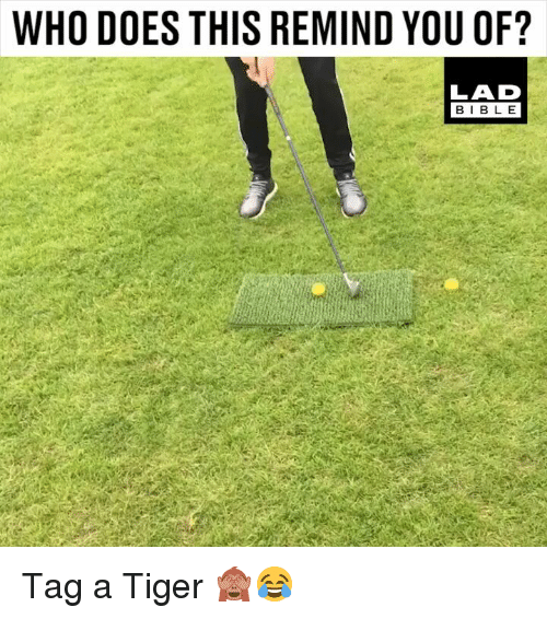 Memes, Tiger, and 🤖: WHO DOES THIS REMIND YOU OF?  LAD  BIBL E Tag a Tiger 🙈😂