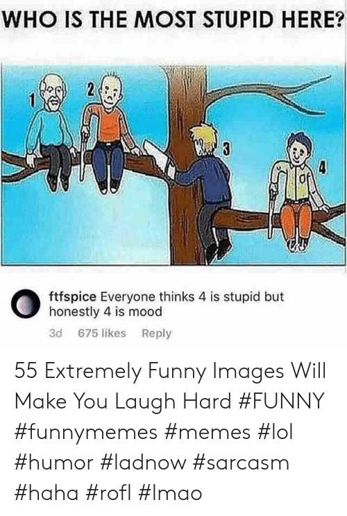 Extremely Funny: WHO IS THE MOST STUPID HERE?  ftfspice Everyone thinks 4 is stupid but  honestly 4 is mood  3d 675 likes Reply 55 Extremely Funny Images Will Make You Laugh Hard #FUNNY #funnymemes #memes #lol #humor #ladnow #sarcasm #haha #rofl #lmao
