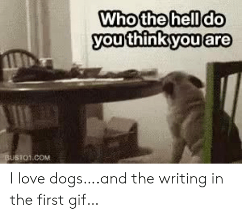 Love Dogs: Who the hell do  you think you are  GUSTO1.COM I love dogs….and the writing in the first gif…
