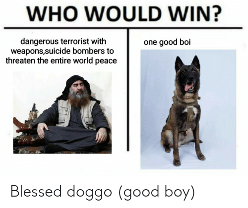 threaten: WHO WOULD WIN?  dangerous terrorist with  weapons,suicide bombers to  threaten the entire world peace  one good boi Blessed doggo (good boy)