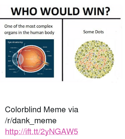 "Complex, Dank, and Meme: WHO WOULD WIN?  One of the most complex  organs in the human body  Some Dots  Eye Anatomy <p>Colorblind Meme via /r/dank_meme <a href=""http://ift.tt/2yNGAW5"">http://ift.tt/2yNGAW5</a></p>"