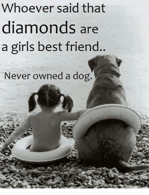 a best friend is man's best Man's best friend definition, a dog, especially as a pet see more.