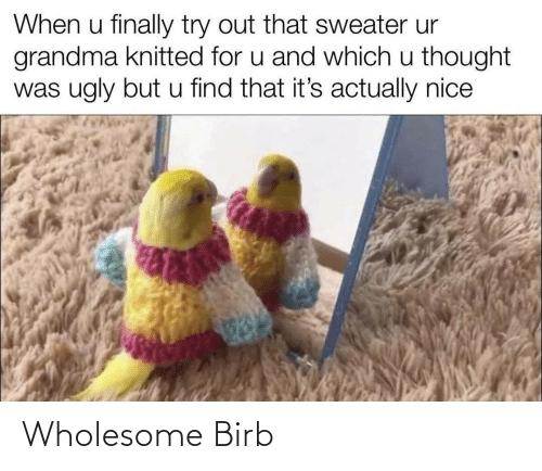 Wholesome and  Birb: Wholesome Birb