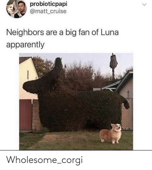 Corgi and Wholesome: Wholesome_corgi