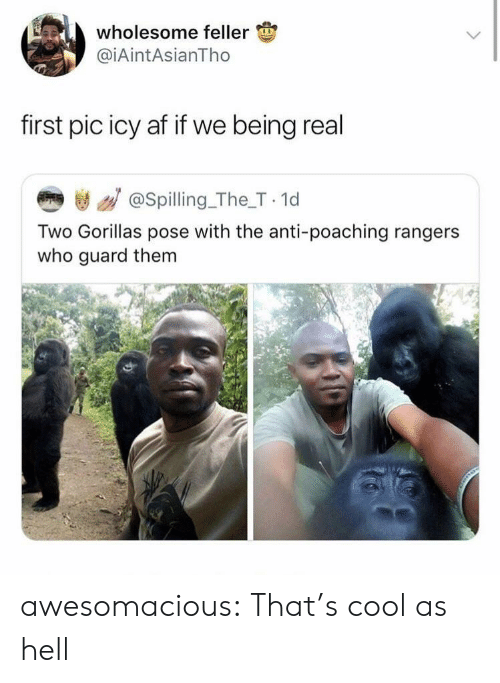 Af, Tumblr, and Blog: wholesome feller  @iAintAsianTho  first pic icy af if we being real  き / @spilling_The_T 1d  Two Gorillas pose with the anti-poaching rangers  who guard them awesomacious:  That's cool as hell