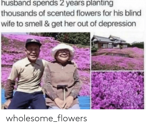 Wholesome: wholesome_flowers