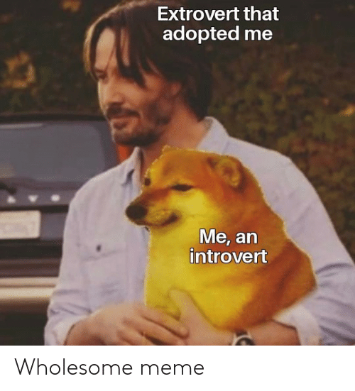 Meme, Wholesome, and Wholesome Meme: Wholesome meme