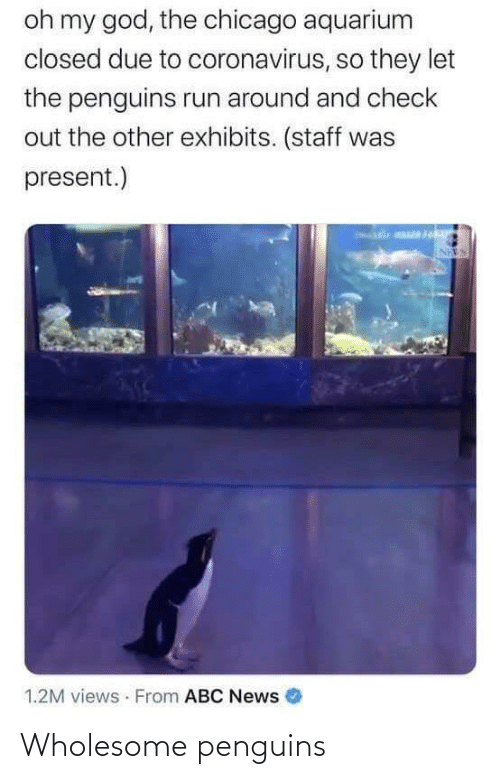 Wholesome: Wholesome penguins