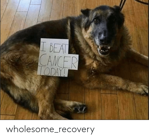 Wholesome: wholesome_recovery
