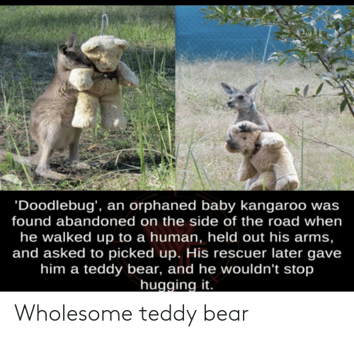 Wholesome: Wholesome teddy bear