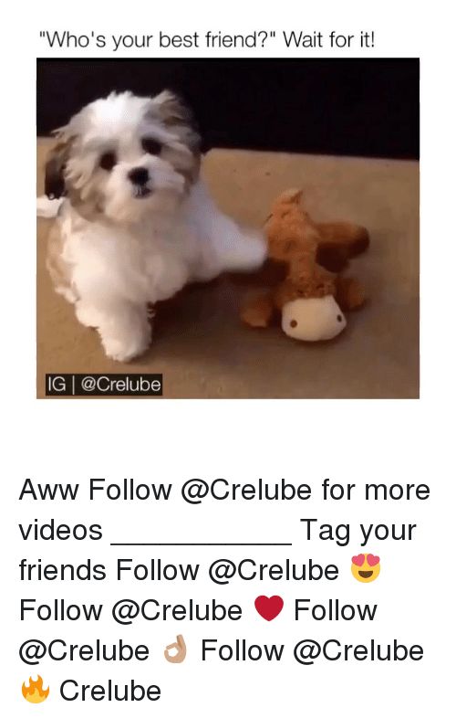"""Awwe: """"Who's your best friend?"""" Wait for it!  IG 