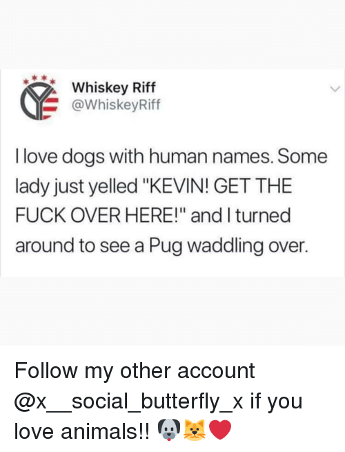 "Animals, Dogs, and Love: Whskey Riff  @WhiskeyRiff  I love dogs with human names. Some  lady just yelled ""KEVIN! GET THE  FUCK OVER HERE!"" and l turned  around to see a Pug waddling over. Follow my other account @x__social_butterfly_x if you love animals!! 🐶🐱❤"