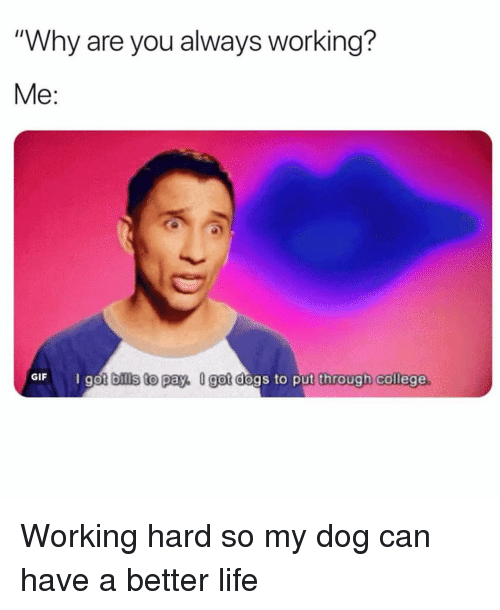 """College, Dogs, and Gif: """"Why are you always working?  Me:  GIF  got bills to pay, U got dogs to put through college Working hard so my dog can have a better life"""