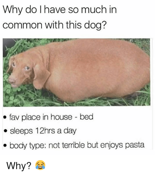 Commoner: Why do I have so much in  common with this dog?  fav place in house-bed  . sleeps 12hrs a day  . body type: not terrible but enjoys pasta Why? 😂
