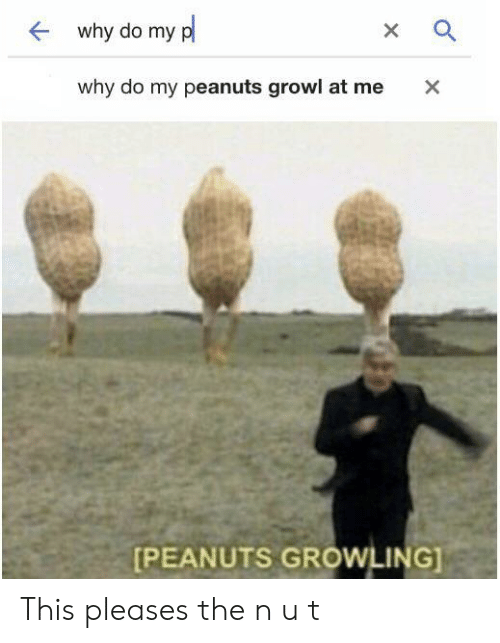 growl: why do my p  X  why do my peanuts growl at me  X  [PEANUTS GROWLING] This pleases the n u t