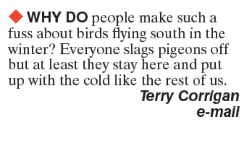 birds flying: WHY DO people make such a  fuss about birds flying south in the  winter? Everyone slags pigeons off  but at least they stay here and put  up with the cold like the rest of us.  Terry Corrigan  e-mail