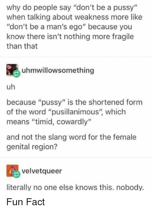"""Pussy, Word, and Fun: why do people say """"don't be a pussy""""  when talking about weakness more like  """"don't be a man's ego"""" because you  know there isn't nothing more fragile  than that  uhmwillowsomething  uh  because """"pussy"""" is the shortened form  of the word """"pusillanimous"""", which  means """"timid, cowardly""""  and not the slang word for the female  genital region?  velvetqueer  literally no one else knows this. nobody. Fun Fact"""