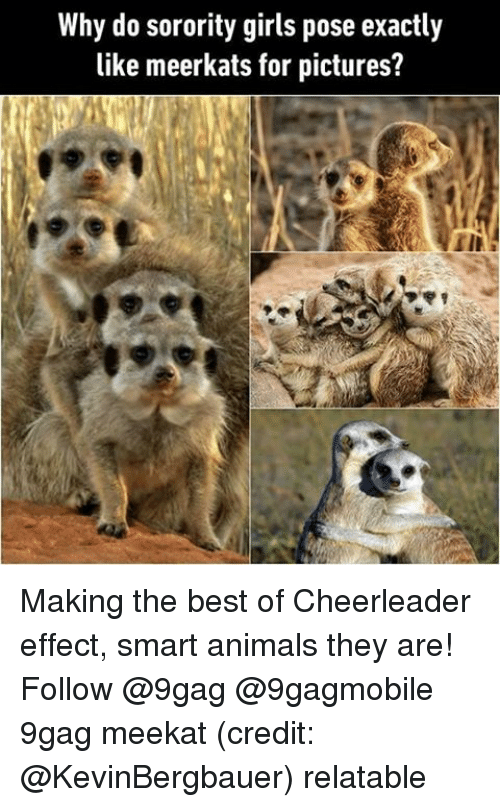 9gag, Memes, and Cheerleader: Why do sorority girls pose exactly  like meerkats for pictures? Making the best of Cheerleader effect, smart animals they are! Follow @9gag @9gagmobile 9gag meekat (credit: @KevinBergbauer) relatable
