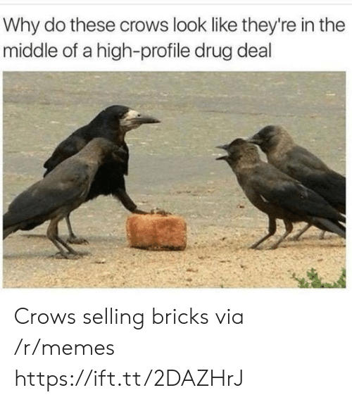 drug deal: Why do these crows look like they're in the  middle of a high-profile drug deal Crows selling bricks via /r/memes https://ift.tt/2DAZHrJ