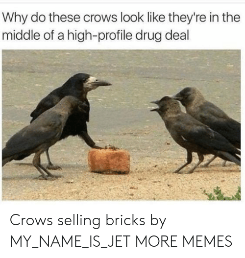 drug deal: Why do these crows look like they're in the  middle of a high-profile drug deal Crows selling bricks by MY_NAME_IS_JET MORE MEMES