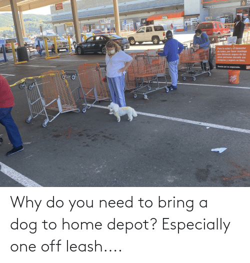 Depot: Why do you need to bring a dog to home depot? Especially one off leash....