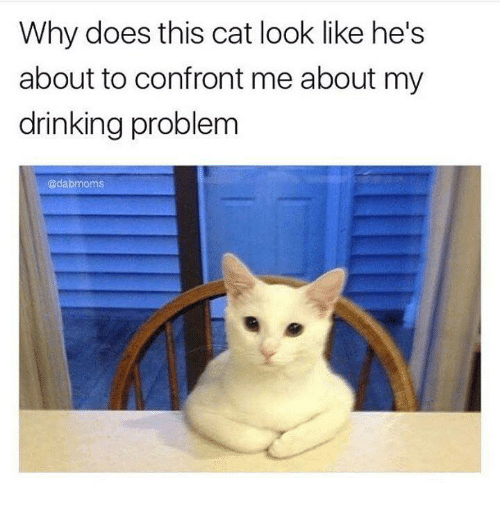 Confrontable: Why does this cat look like he's  about to confront me about my  drinking problem  Cadabmoms