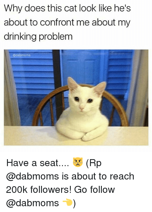 Confrontable: Why does this cat look like he's  about to confront me about my  drinking problem  @dabmoms Have a seat.... 😾 (Rp @dabmoms is about to reach 200k followers! Go follow @dabmoms 👈)