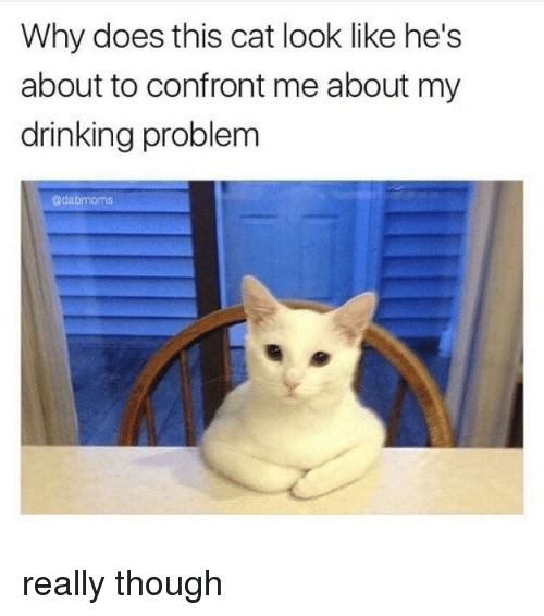 Confrontable: Why does this cat look like he's  about to confront me about my  drinking problem  @dabmoms really though