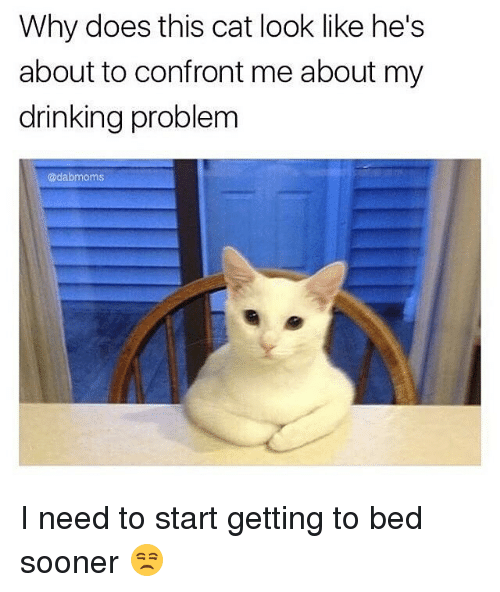 Confrontable: Why does this cat look like he's  about to confront me about my  drinking problem  adab moms I need to start getting to bed sooner 😒