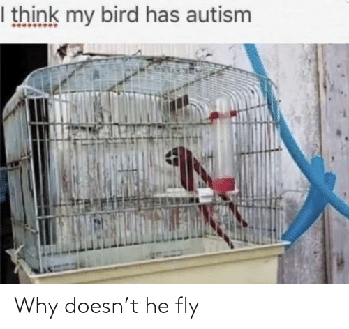 fly: Why doesn't he fly
