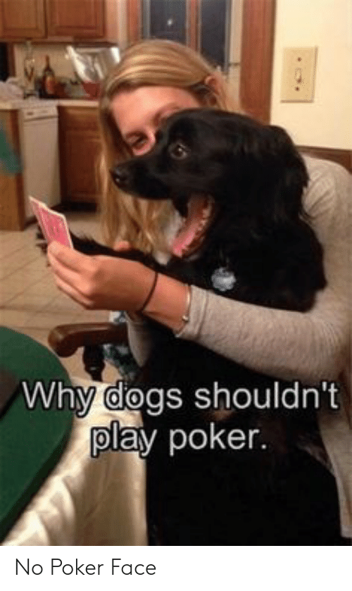 poker: Why dogs shouldn't  play poker. No Poker Face