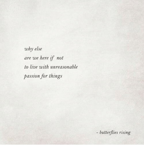 We Here: why else  are we here if not  to live with unreasonable  passion for things  - butterflies rising