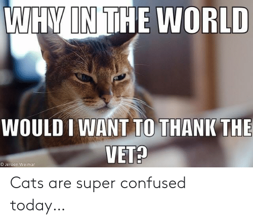 vet: WHY IN THE WORLD  WOULD I WANT TO THANK THE  VET?  OJeroen Weimar Cats are super confused today…