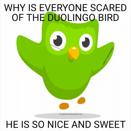 Send Help: WHY IS EVERYONE SCARED  OF THE DUOLINGO BIRD  PLS SEND HELP HE MADE ME DO THIS  HE IS SO NICE AND SWEET