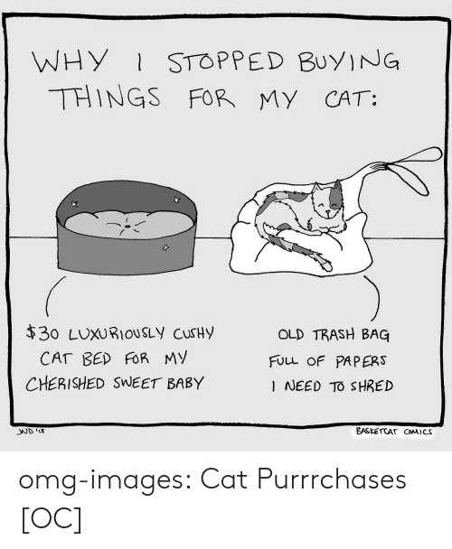 Omg, Trash, and Tumblr: WHY STOPPED BuyING  THINGS FOR MY CAT:  $30 LUXURIOUSLy cuSHy  OLD TRASH BAG  FULL OF PAPERS  I NEED TO SHRED  CHERISHED SWEET BABY  SND 1  EASKETCAT CoMICS omg-images:  Cat Purrrchases [OC]