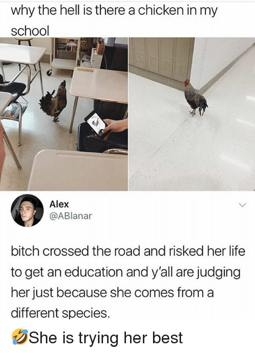 Bitch, Life, and Memes: why the hell is there a chicken in my  school  Alex  @ABlanar  bitch crossed the road and risked her life  to get an education and y'all are judging  her just because she comes from a  different species 🤣She is trying her best
