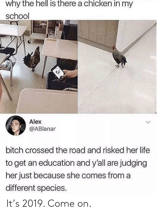 Bitch, Life, and School: why the hell is there a chicken in my  school  Alex  @ABlanar  bitch crossed the road and risked her life  to get an education and y'all are judging  her just because she comes froma  different species. It's 2019. Come on.