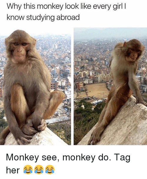 Memes, Girl, and Monkey: Why this monkey look like every girl I  know studying abroad Monkey see, monkey do. Tag her 😂😂😂