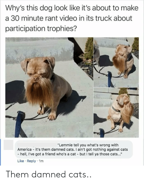 "America: Why's this dog look like it's about to make  a 30 minute rant video in its truck about  participation trophies?  ""Lemmie tell you what's wrong with  America - it's them damned cats. I ain't got nothing against cats  - hell, I've got a friend who's a cat - but I tell ya those cats...""  Like · Reply · 1m Them damned cats.."