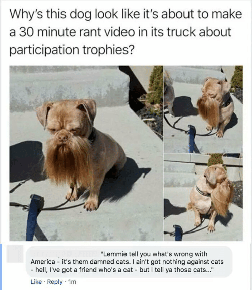 "Against: Why's this dog look like it's about to make  a 30 minute rant video in its truck about  participation trophies?  ""Lemmie tell you what's wrong with  America - it's them damned cats. I ain't got nothing against cats  - hell, I've got a friend who's a cat - but I tell ya those cats...""  Like · Reply · 1m"