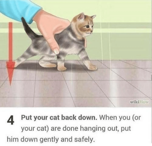 wiki how: wiki How  4 Put your cat back down. When you (or  your cat) are done hanging out, put  him down gently and safely.